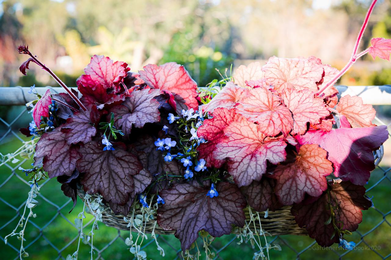 Gardening tips: Combination Planters