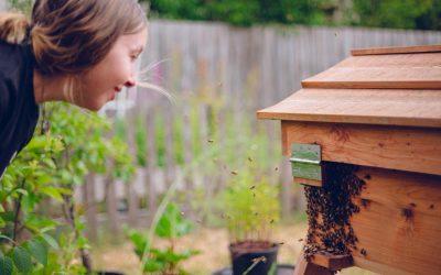 Beekeeping Webinar